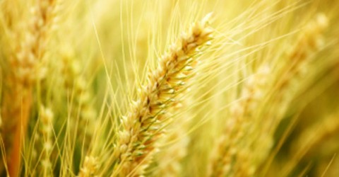 China Report - Dietary Fiber: Preventing Cancer in China