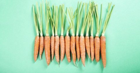 Carrots: What's Up Doc?