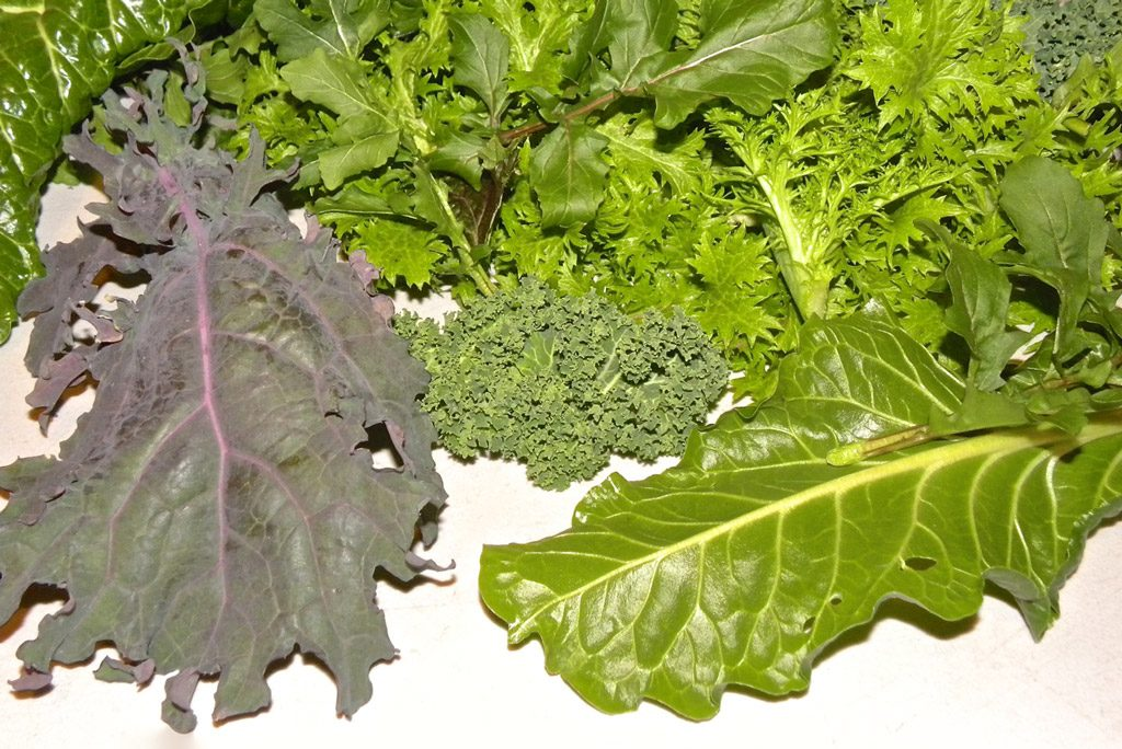 Different types of harvested greens