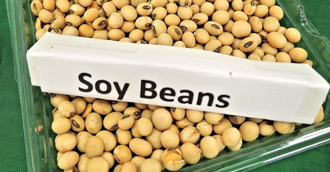 3 Myths About Soy – Setting the Record Straight
