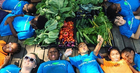 Sustainable Urban Agriculture — Reshaping Harlem's Food Desert