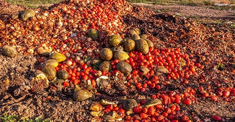 Reducing Food Waste Across the Supply Chain: Statistics & Strategies