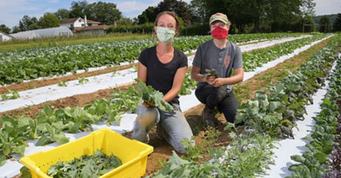 St. Luke's University Grows CSA to Feed Families & Employ Farmers