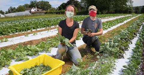 St. Luke's University Health Network CSA Feeds Families & Employs Farmers