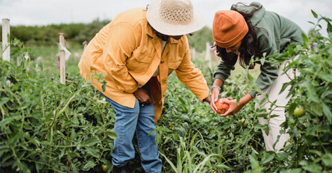 Carbondale Spring Food Autonomy Initiative Creates Equitable Food Systems in Illinois