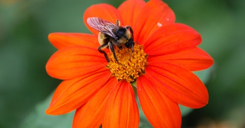 Are U.S. Honey Bees Sustainable?